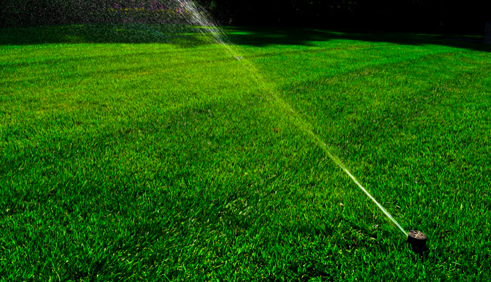 Don't risk your plants by ignoring their water needs.