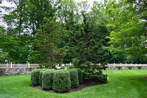 using foundation plants in your yard